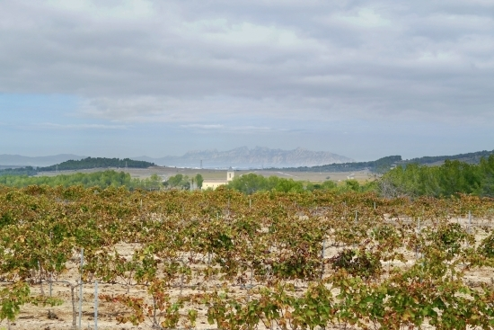 beautiful country views over the vineyard on a Barcelona Day trip to a winery with wanderbeak